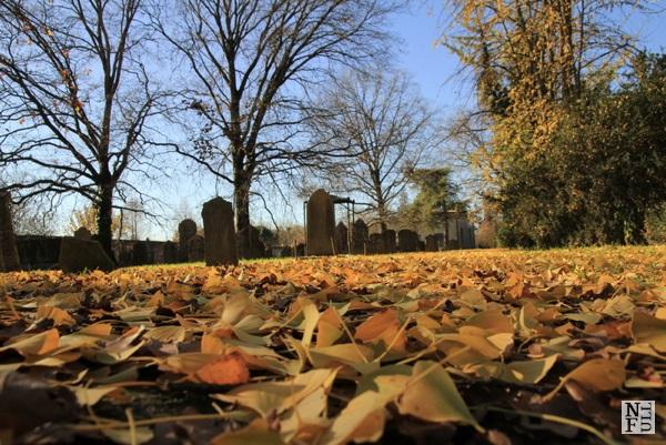 Hebrew Cemetery in Ferrara
