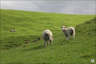 New Zealand: My Regrets