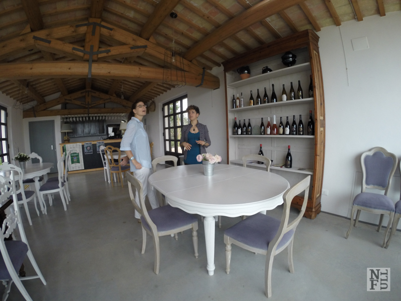 Terracruda, vineyard, Marche, Italy