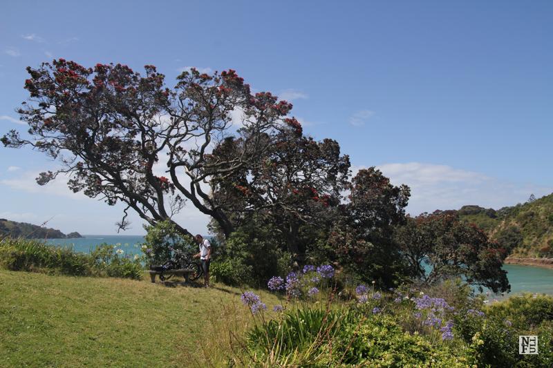 Landscape of Waiheke Island