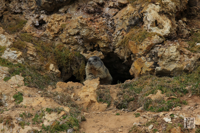 How to meet a marmot