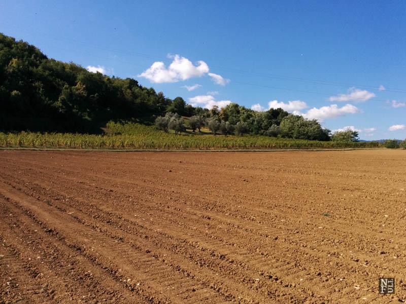 Food, Wine, Cooking Classes and Art of Emilia-Romagna